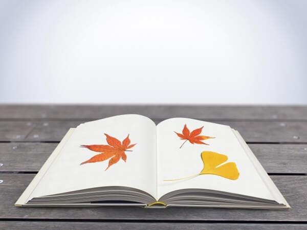 本と秋の木の葉