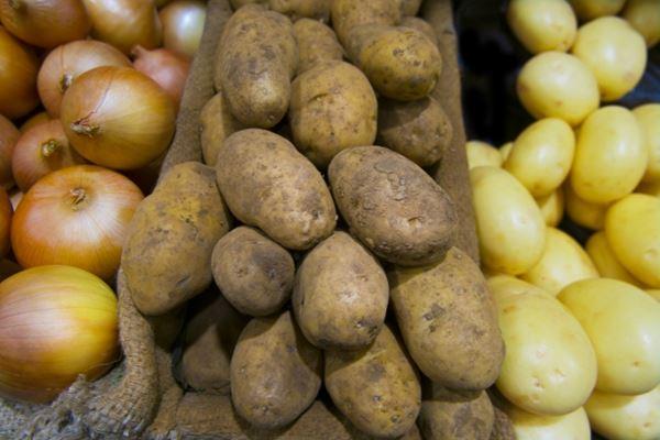 野菜の貯蔵