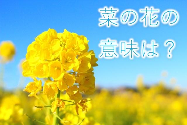 菜の花の意味は?