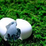 芝生と卵と地球儀