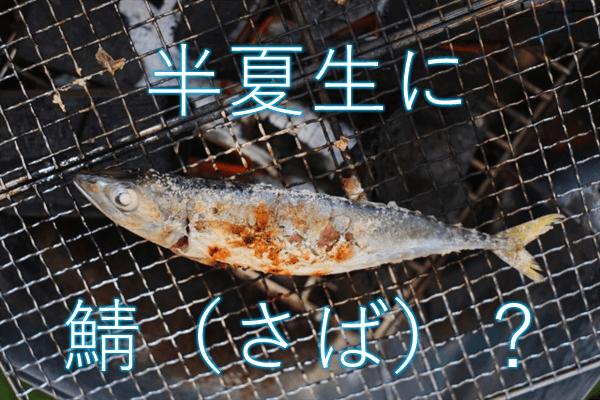 半夏生に鯖(さば)?
