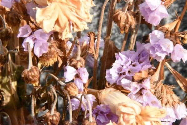 枯れた仏花