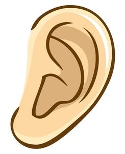左の耳たぶ