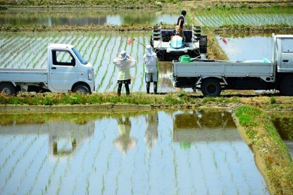 水田で田植えをする人たち