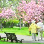桜の下を歩く老夫婦