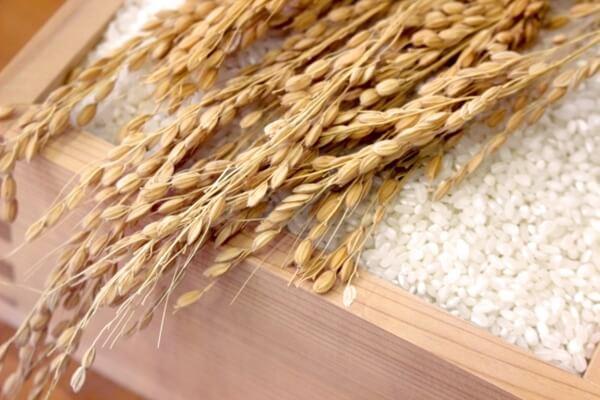 稲と枡に入った米