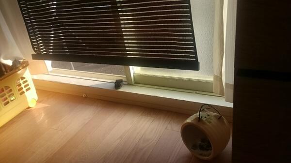 窓の傍に置いた蚊取り豚